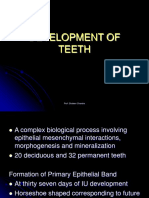 Devlopment of Teeth