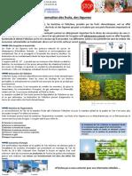 Bioclimatic-Conservation Des Fruits Et Legumes_1.1