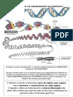 cromossomas.pdf