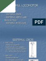 anatomie schelet Presentation2