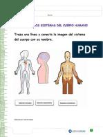 FICHA DE REFUERZO IDENTIFICA LOS SISTEMAS DEL CUERPO HUMANO (1).pdf