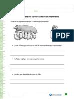 etapas del ciclo de vida de los mamíferos.doc