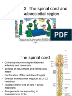 3-Spinal Cord Gross