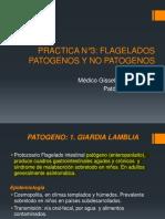Practica N_3 Flagelados.pdf