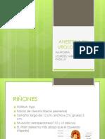 anestesia en urologia, anatomia.pptx