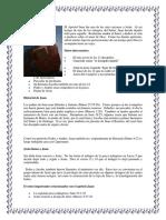 Breve Biografia de Juan Apostol