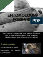 ENTOMOLOGIA FORENSE.ppt