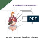 Guia de Repaso Repaso Sistemas Digestivo, Locomotor y Circulatorio