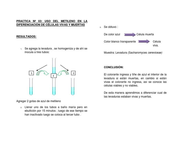 Uso Del Metileno en Diferenciacion de Celulas Vivas