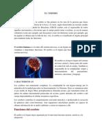 El Cerebro 1