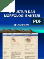 Struktur dan Morfologi Bakteri