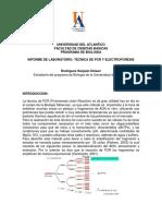Informe LAB Molecular (PCR)