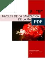 Organizacion de La Materia