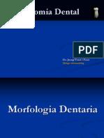 Anatomia Dental 2