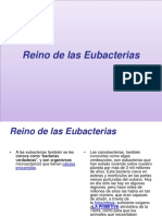 Reino de las Eubacterias.pptx