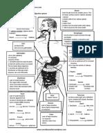 Human Digestive PDF