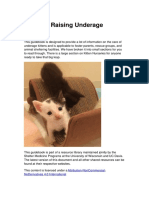 Guide to Raising Underage Kittens.20170427190145