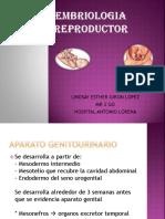 Embriologia Reproductor Lin