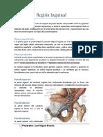 regin_inguinal-guia.pdf