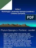 01 - Spongia i Cnidaria
