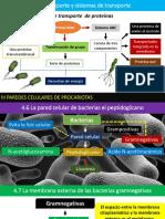 TEMA 1 Microbiologia