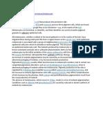 Melanocytes - Melanin