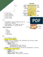 2 Semiologia de La Piel (Salvo Automaticamente)