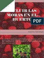 Armando Nerio Guedez Rodríguez - Incluir Las Moras en El Huerto
