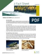 Emerald Ash Borer Fact Sheet