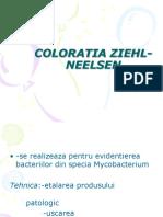 COLORATIA ZIEHL-NEELSEN