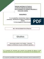 Semana 4. Glicólisis, gluconeogénesis..ppt