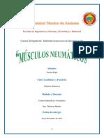 musculos neumaticos