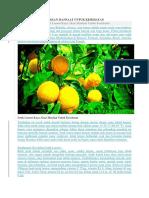 Jeruk Lemon Kaya Akan Manfaat Untuk Kesehatan