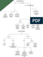 Bacteria Flow Chart