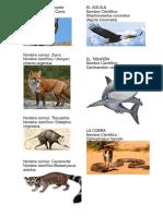 50 Animales Con Fotos y Sus Nombres Cientificos