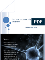 clulaynutricinenelserhumano-110808233129-phpapp01