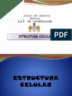 Estructura Celular