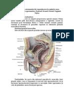 Anatomia Sistemului de Reproducere