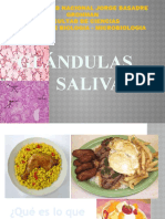 GLÁNDULAS SALIVALES -histologia