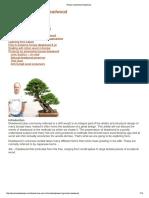 Driffwood.pdf