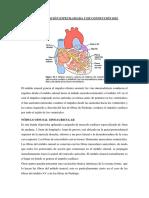 Sistema de Excitación Especilaizada y de Conducción Del Corazón