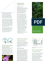 tropical forest biome brochure