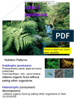 Ch 07 Photosynthesis.pdf