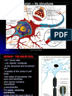 15.09.14. Pro. Nerve Fiber Types