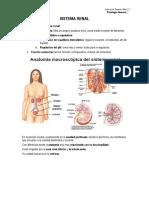 Fisiología Bloque 7. Renal (T. 19 -22)