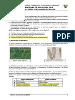 Prueba Diagnóstica Cta 1