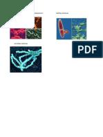 Bacteria Metanogenicas