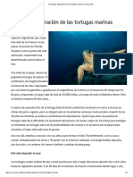 Reportaje_ Migración de Las Tortugas Marinas _ Oceana EU