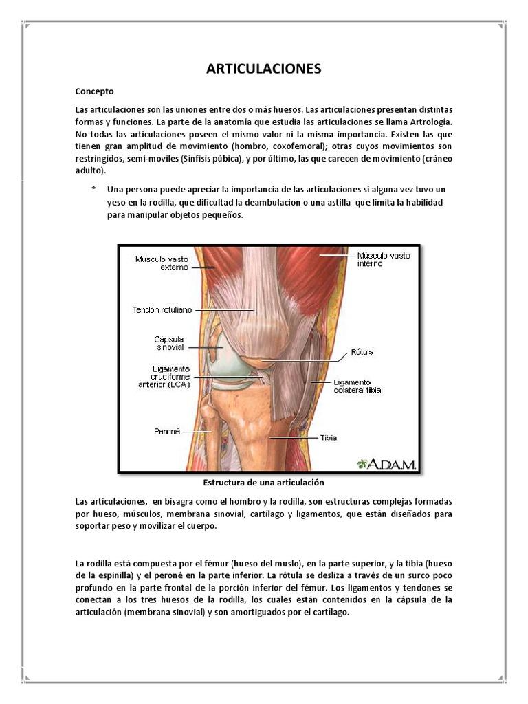 Magnífico Hombro Anatomía Compleja Fotos - Imágenes de Anatomía ...