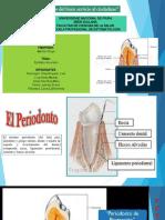 Diapositivas de Epitelio de Unión